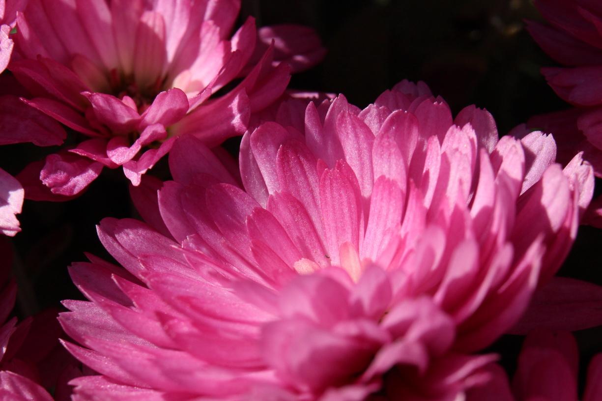 Flori 455
