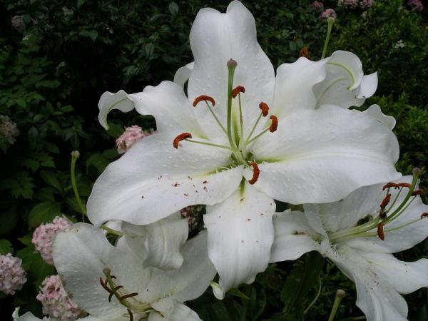 Flori 534