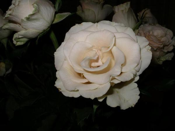 Flori 540