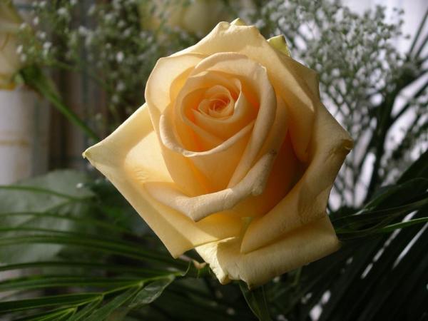 Flori 552