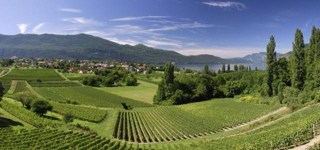 FRANŢA: un adevărat simbol în lumea vinurilor