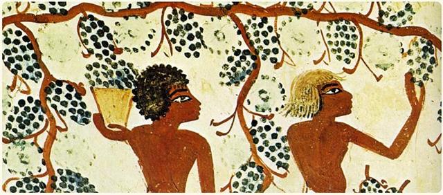 istoria-vinului