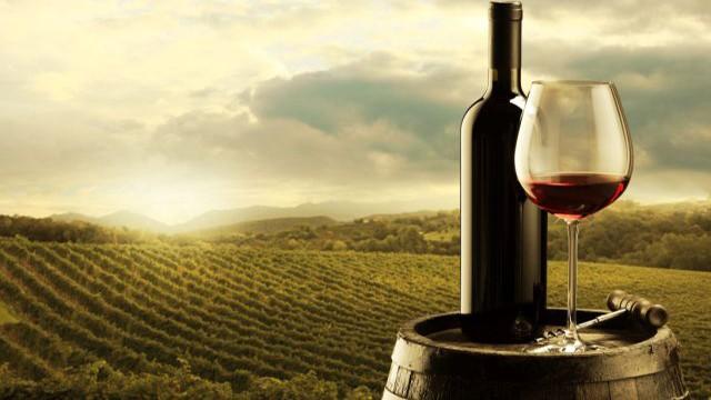 viticultura-640x360