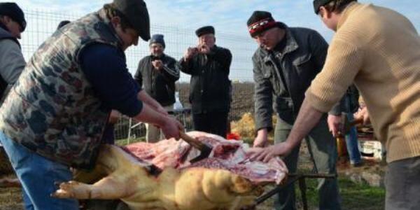 Concurs de tăiat şi gătit porci
