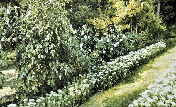 gradina-botanica-Prajesti-03