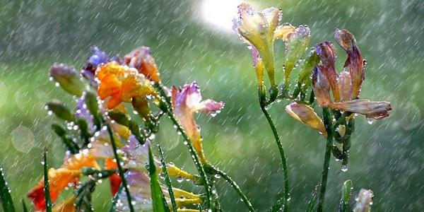 Primăvară caldă, cu precipitaţii excedentare