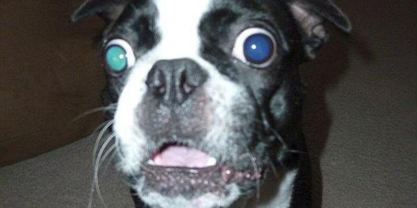 Bruschi, câinele cu cei mai mari ochi