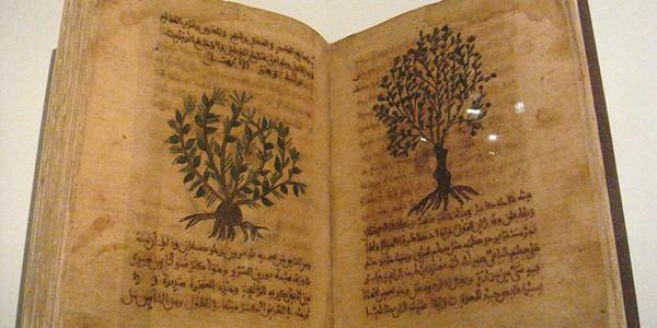 Prima carte despre plante medicinale