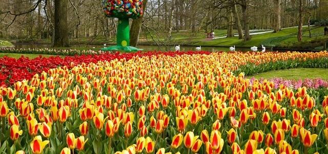 Parcul cu 800 de soiuri de lalele