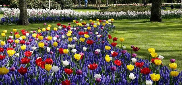 7 milioane de flori în Parcul Keukenhof
