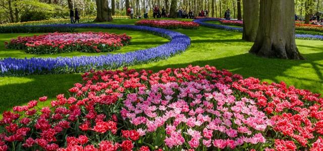 Laleaua, o călătorie din Orient spre grădinile olandeze