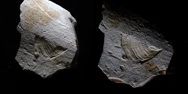 Logo-ul de la Twitter, descoperit pe o piatră scrijelită în Paleolitic