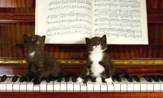 pisici-muzica