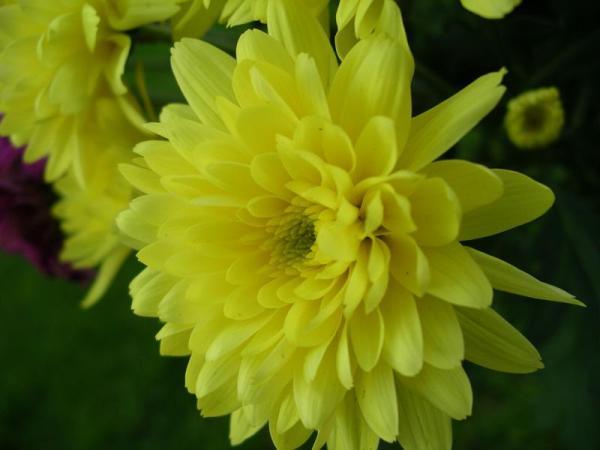 Flori 499