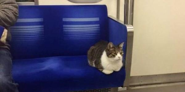 O pisică se plimbă de trei ani cu metroul din Tokyo