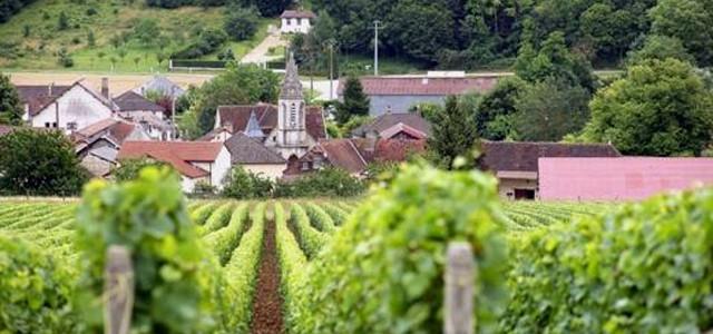 """Regiunea viticolă Champagne, leagăn al """"vinului civilizaţiei"""""""