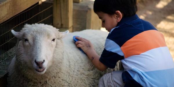 Vacanţă de 4 luni şi jumătate pentru copiii din satele de oieri din Munţii Sebeşului