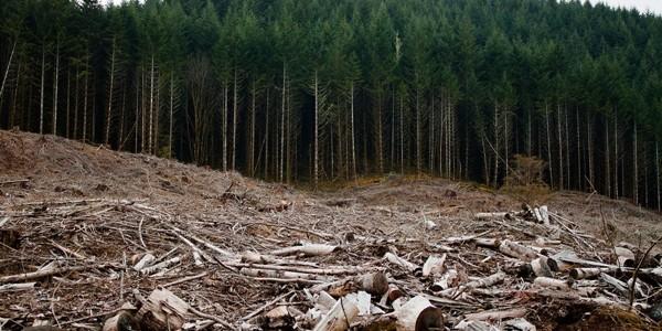 România – 96 de cazuri de tăieri ilegale de arbori pe zi