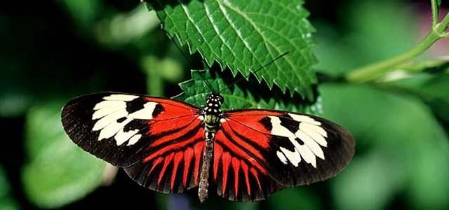 Expoziţie de fluturi tropicali vii