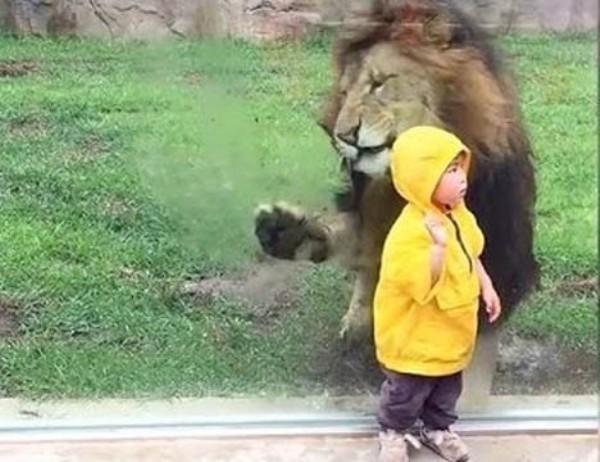 leu-Zoo