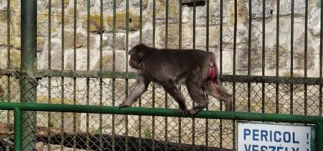 Maimuţa Otto susţine că Portugalia va învinge Polonia