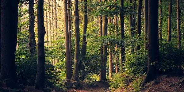 Norvegia – prima ţară care interzice tăierile de copaci
