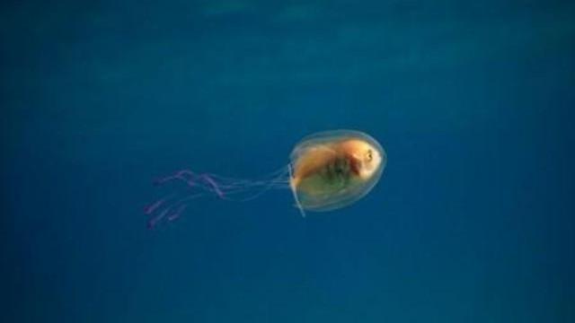 peste-meduza-01
