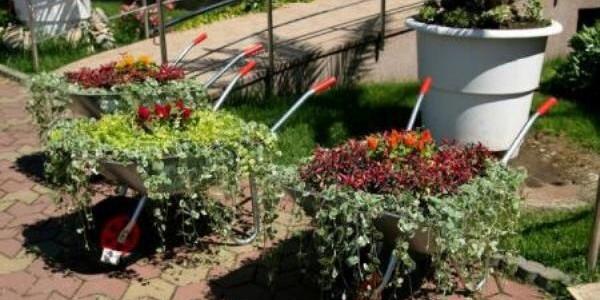 Roabe cu flori – amenajări peisagistice inedite la Grădina Botanică Jibou