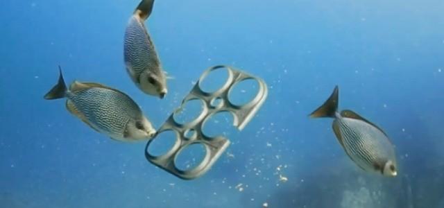 Suport pentru cutii de bere… comestibil pentru peşti