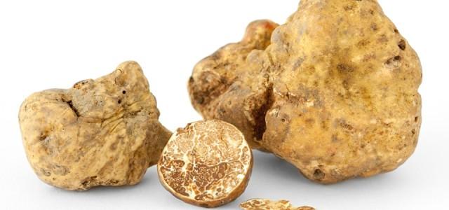 Trufa albă – cea mai scumpă ciupercă din lume