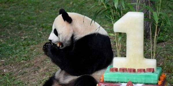 Tort de 70 de kilograme la aniversarea lui Bei Bei