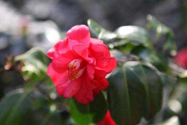 Flori 305