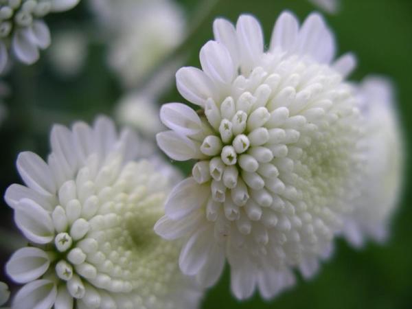 Flori 498