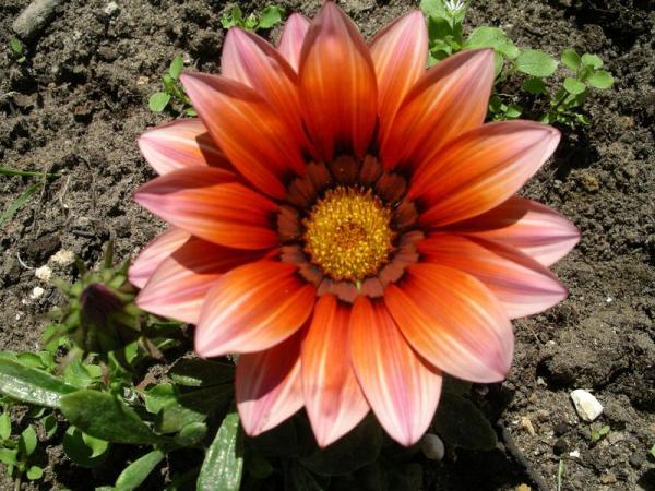 Flori 505