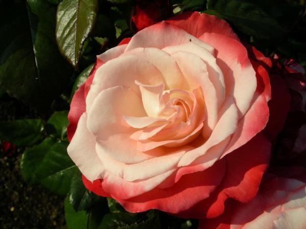 Flori 516