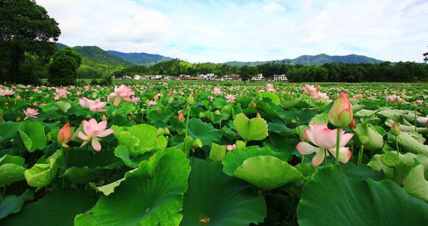 camp-lotus