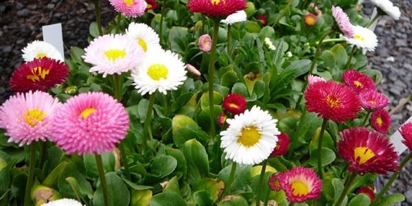 Leacuri din grădină: PĂRĂLUŢE