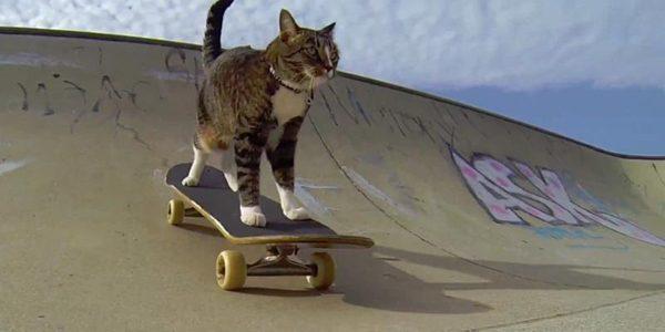 Cele mai multe trucuri realizate de o pisică