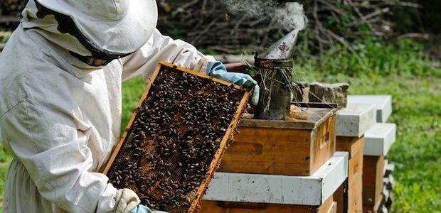 Apicultorii vor primi un ajutor de minimis de 15 lei pe familia de albine
