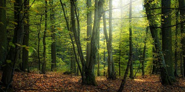 Leonardo DiCaprio atrage atenţia asupra situaţiei pădurilor din România