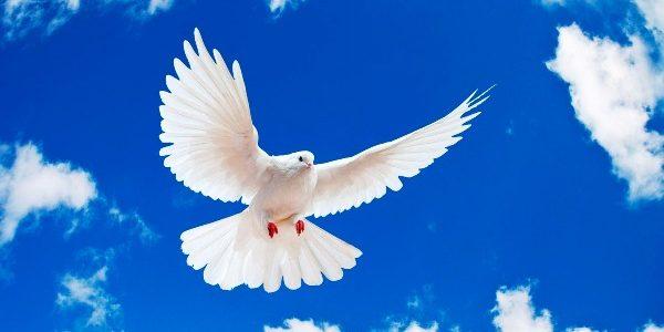 Ziua mondială a păcii