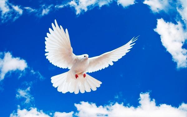 ziua-pacii