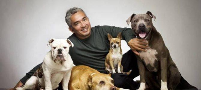Celebrul antrenor de câini Cesar Millan, show la Bucureşti