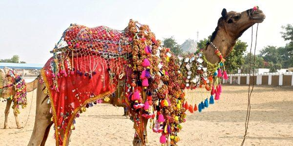 Târgul de cămile de la Pushkar