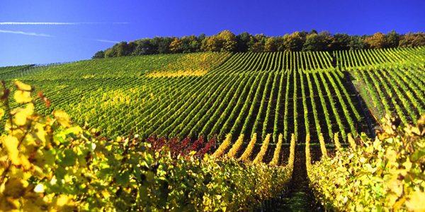 """Germania, """"încântătoare prin frumuseţea peisajului său viticol"""""""
