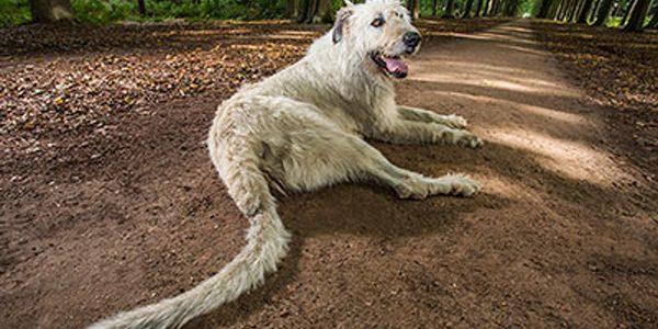 Câinele cu cea mai lungă coadă
