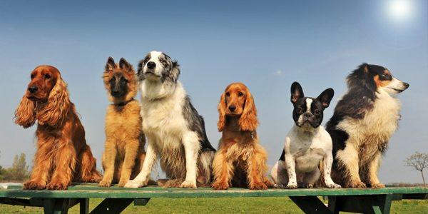 Câinii îşi pot da seama când cineva este nepoliticos