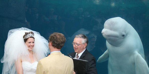O balenă albă a eclipsat o mireasă în ziua nunţii