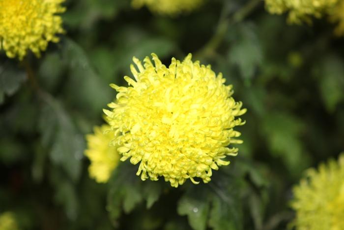 Flori 094