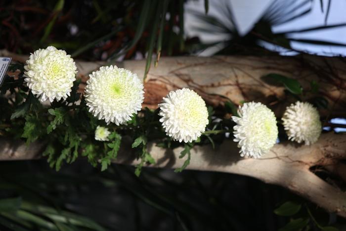Flori 099